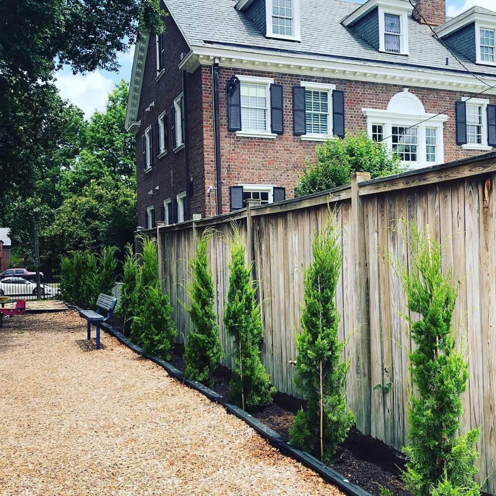 Juniperus-virginiana-Brodie-Virginia-Taylor-green-columnar