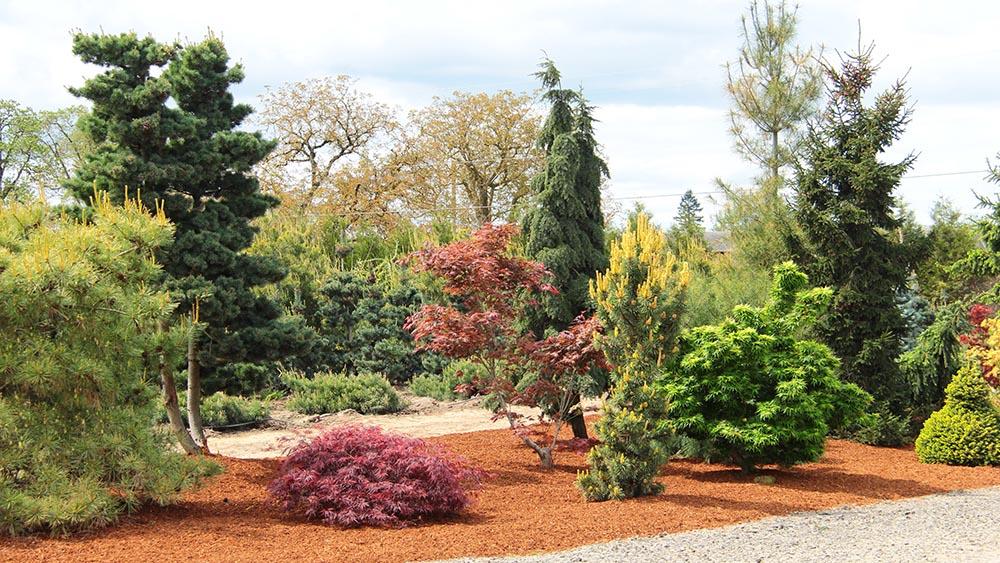Garden-shot-landscape-overview-display