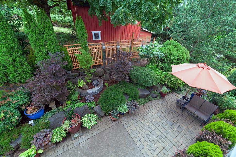 Small-suburban-garden-back-yard-maples-conifers-patio