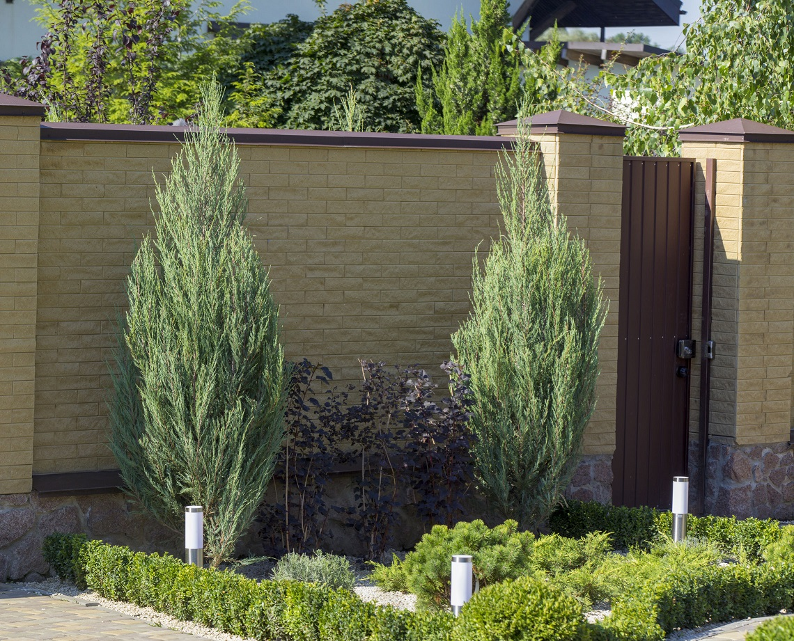 Modern garden design Coniferous plants in the garden.