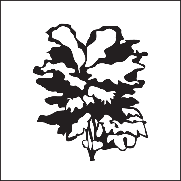 33-upright-open-branching-and-leaves.png