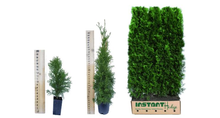 emerald-green-3-sizes
