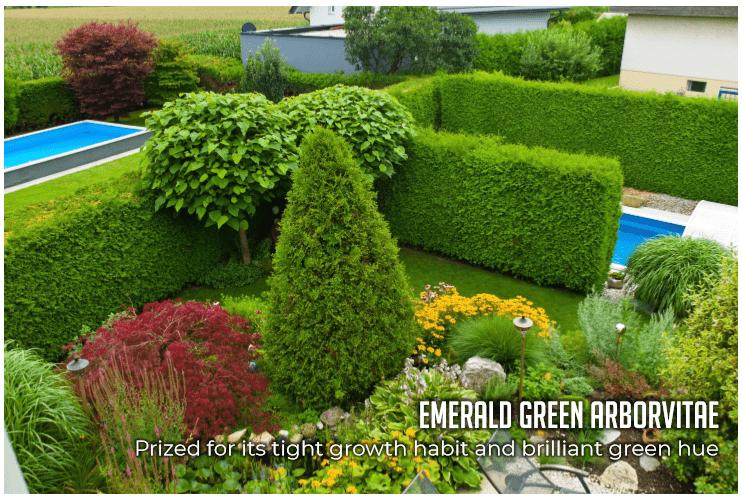 emeraldsgraphic.png