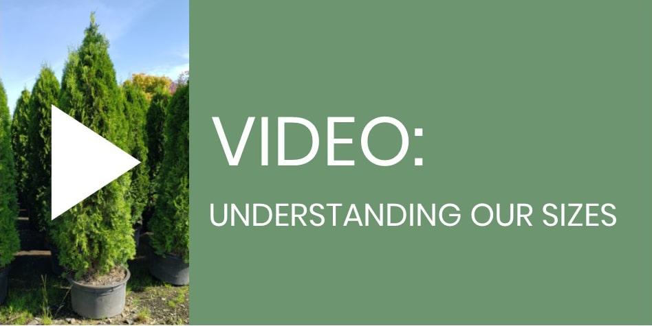 img-video.jpg